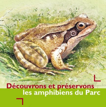 Les amphibiens du Parc